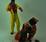 Magische Wens van Zwarte Piet